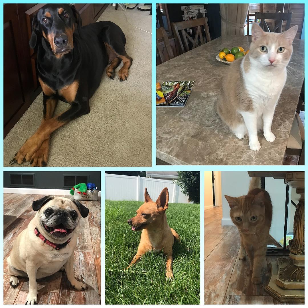 arthritis-ashley-pets